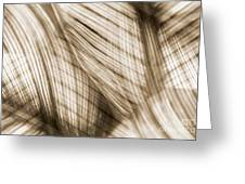 Nature Leaves Abstract In Sepia Greeting Card by Natalie Kinnear