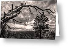 Natures Arch Greeting Card by Debra and Dave Vanderlaan