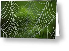 Nature's Best Green Abstract Art Greeting Card by Christina Rollo
