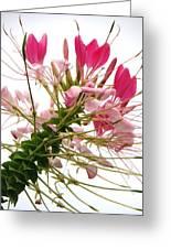 Nature's Love Greeting Card by Arielle Cunnea