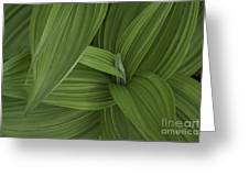 Natures Splendor Greeting Card by Alana Ranney