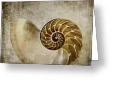 Nautilus Shell Greeting Card by Carol Leigh