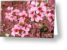 Nectarine Blossoms Greeting Card by Polly Anna