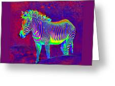 Neon Zebra Greeting Card by Jane Schnetlage