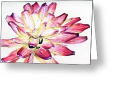 Neoregelia Picasso Greeting Card by Penrith Goff