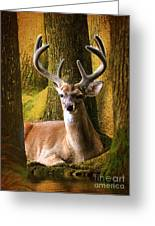 Nestled In The Woods Greeting Card by Kathy Baccari