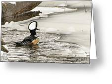 Never Too Cold To Mate Greeting Card by Ilene Hoffman
