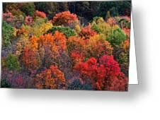 New England Foliage Burst Greeting Card by Thomas Schoeller