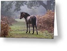 New Forest Pony Greeting Card by Dave Pressland FLPA