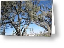 New Orleans - Swamp Boat Ride - 12122 Greeting Card by DC Photographer