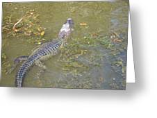 New Orleans - Swamp Boat Ride - 121258 Greeting Card by DC Photographer