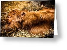 Newborn Nap Greeting Card by Sue OConnor