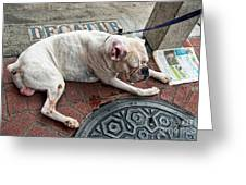 Newsworthy Dog In French Quarter Greeting Card by Kathleen K Parker
