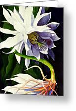 Night Blooming Cereus Greeting Card by Janis Grau