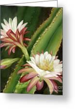 Night Cereus Greeting Card by Summer Celeste