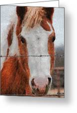 No Fences Greeting Card by Jeff Kolker