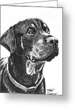 Noble Rottweiler Sketch Greeting Card by Kate Sumners