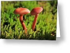 North Cascades Mushrooms Greeting Card by Benjamin Yeager