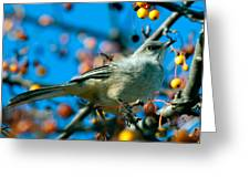 Northern Mockingbird Greeting Card by Bob Orsillo