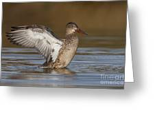 Northern Shoveler Hen Wing Flap Greeting Card by Bryan Keil