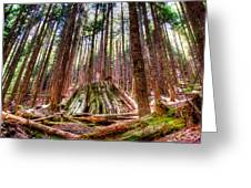 Northwest Old Growth Greeting Card by Spencer McDonald