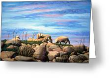 Norwegian Sheep Greeting Card by Janet King