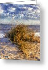 November Dune Grass Greeting Card by Daniel Eskridge