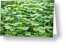 Nuanced Nasturtium Greeting Card by Joe Schofield