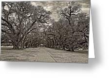 Oak Alley 3 Sepia Greeting Card by Steve Harrington