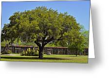 Oak Tree Mission San Jose Tx Greeting Card by Christine Till
