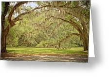 Oak Trees Draped With Spanish Moss Greeting Card by Kim Hojnacki