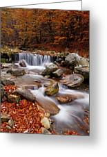 October Stream Greeting Card by Mircea Costina Photography