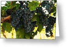 October Vintage Bonair Winery  Greeting Card by Jeff  Swan