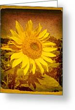 Of Sunflowers Past Greeting Card by Bob Orsillo