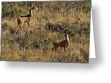 Oh Deer Greeting Card by Charles Warren