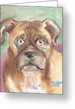 Old Boxer Greeting Card by Christine Callahan