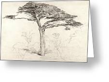 Old Cedar Tree In Botanic Garden Chelsea Greeting Card by Samuel Palmer