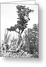 Old Gnarly Tree Greeting Card by Edward Fielding