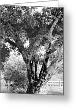 Old Tree Greeting Card by Gilbert Artiaga