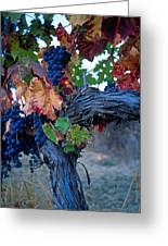 Old Vine Greeting Card by Kathy Yates