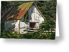 Old Whitewashed Barn In Tennessee Greeting Card by Debbie Karnes
