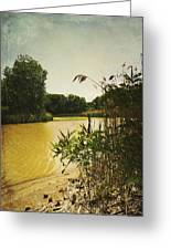 Old Woman Creek  Greeting Card by Shawna Rowe