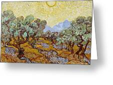Olive Trees Greeting Card by Vincent Van Gogh