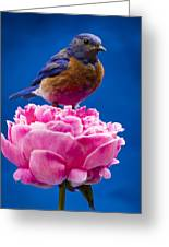 On Guard Greeting Card by Jean Noren