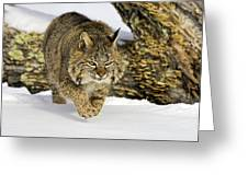 On The Prowl Greeting Card by Jack Milchanowski