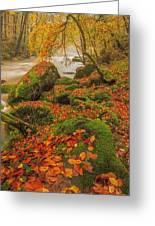 On The Riverside Greeting Card by Maciej Markiewicz