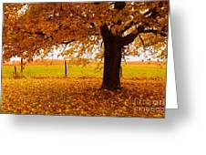 One Autumn Tree Greeting Card by Terri Gostola