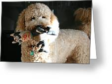 One Happy Labradoodle Greeting Card by Horst Duesterwald