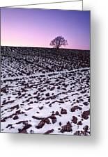 One More Tree Greeting Card by John Farnan
