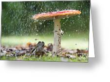 One Rainy Day Greeting Card by Tim Gainey